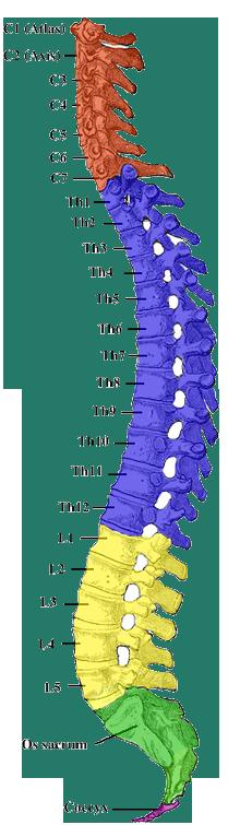 Rozpisany kręgosłup