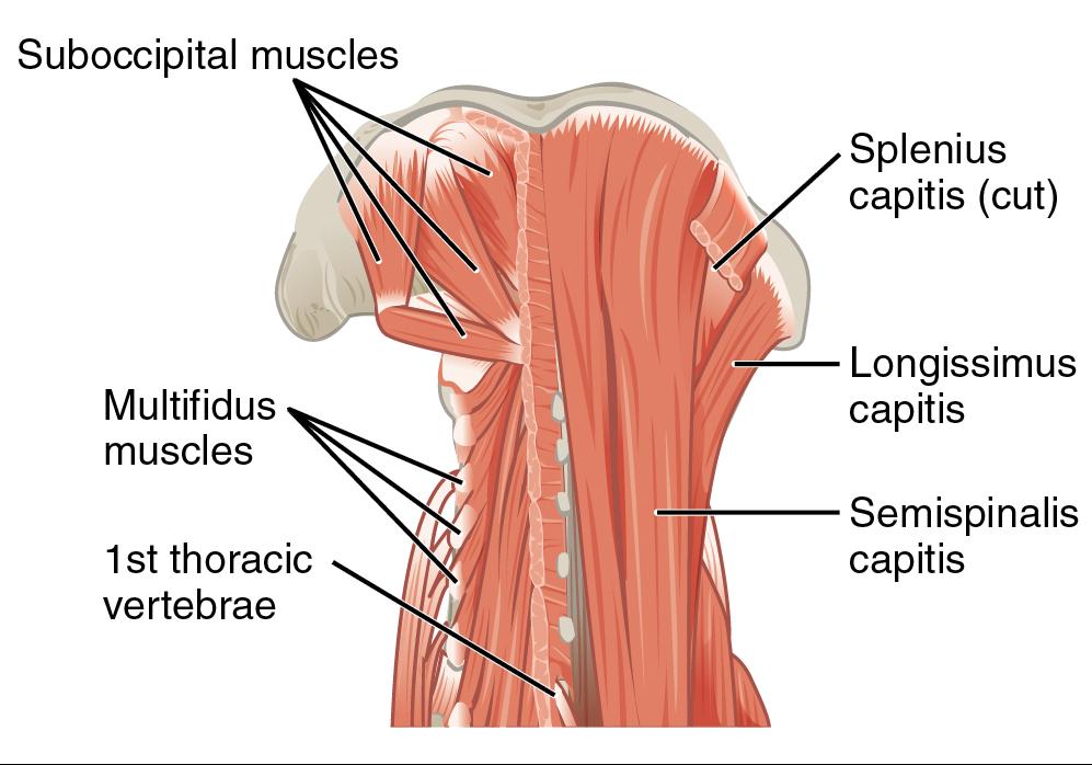 szyja rehabilitacja bol glowy ortopeda krakow fizjoterapeuta krakow rehabilitacja podgorze
